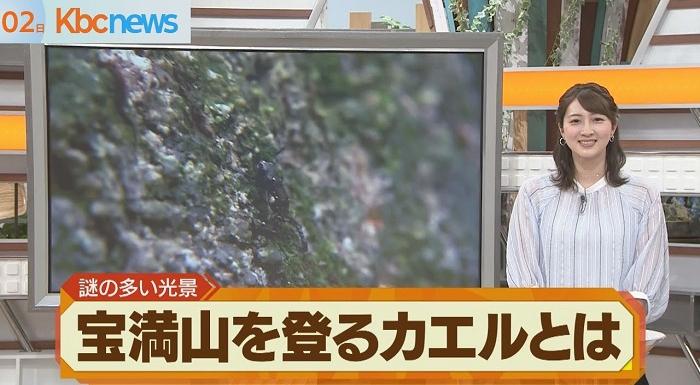 一体なぜ?数万匹のヒキガエルが山を登り始める【宝満山】