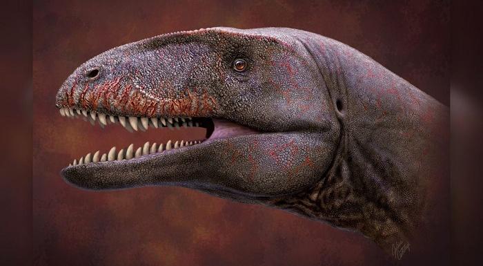 ウズベキスタンで新種の肉食恐竜化石を発見